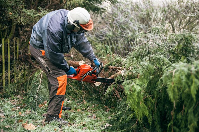 Baumpflege und stutzen in Lüneburg - Hamburg - Winsen Luhe