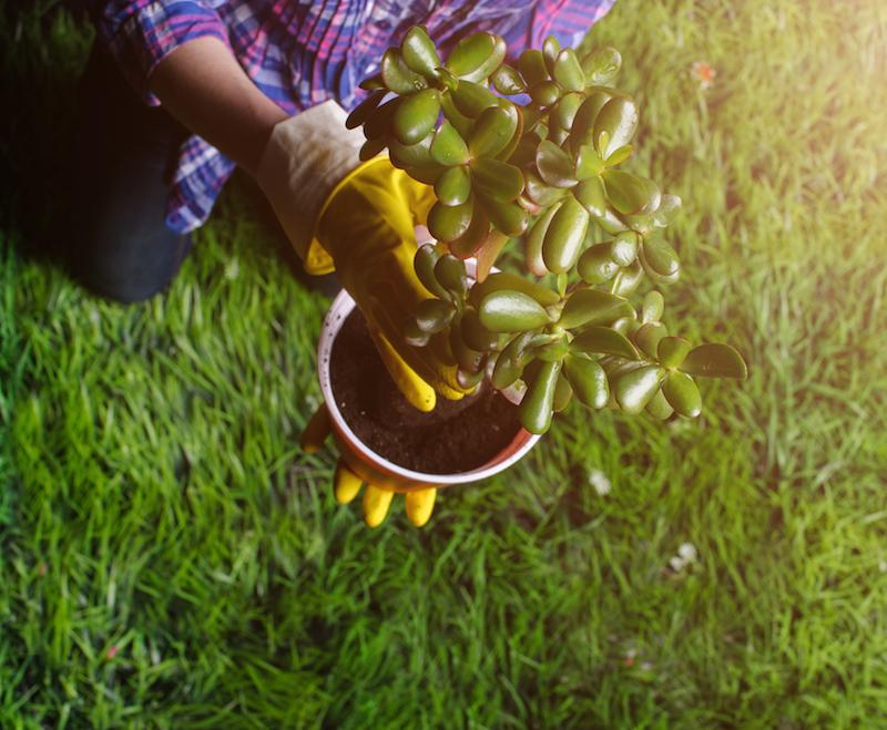 Hecke neu anlegen und pflanzen
