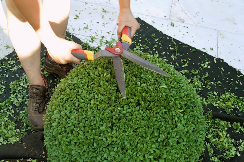Gartenpflege zum Thema Hecke schneiden